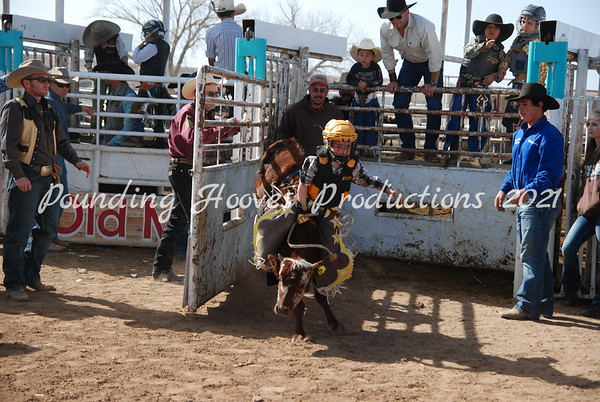 Calf Riding Sun 3-4-12