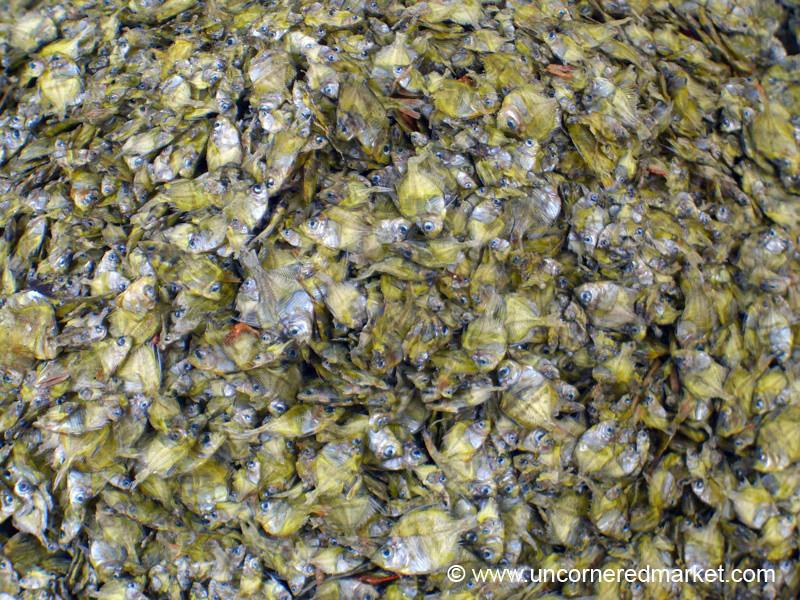 Dried Fish - Inle Lake, Burma
