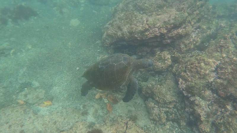 GalápagosSeaTurtle2.mp4