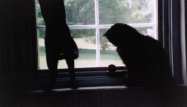 2000_April_More_Cats
