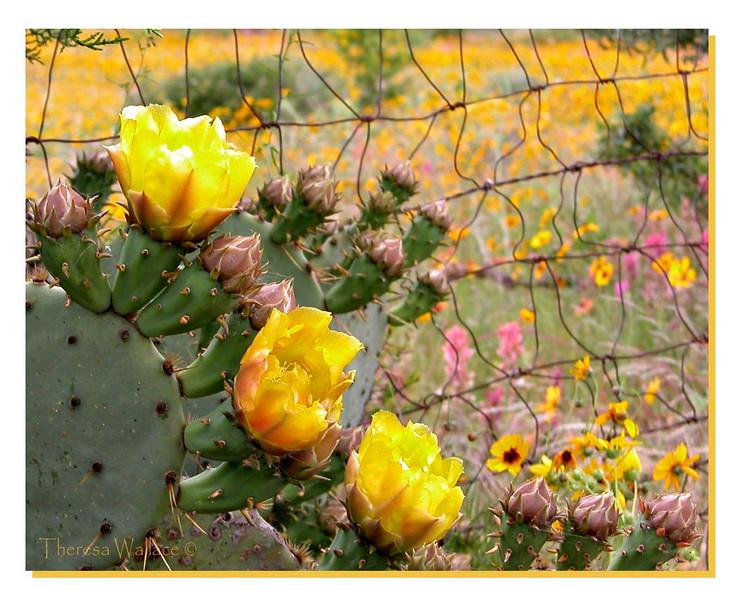 Cactus signed.JPG