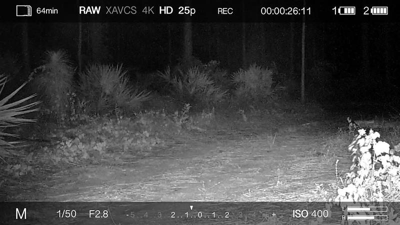 Panther hunting take 6.mp4