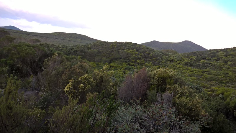 We spent a couple of days at Grootbos Private Nature Reserve, home to some of the richest flora on earth.