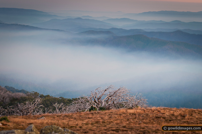 Early morning light over Wabonga Plateau from Mt Stirling. Smoke from a nearby bushfire fills the valleys below around 1000m