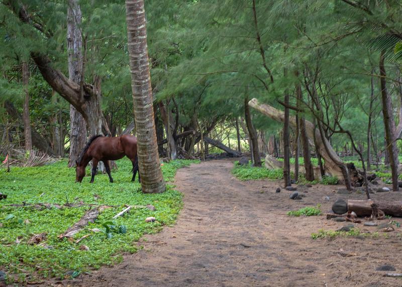 Beautiful Hawaii-29.jpg