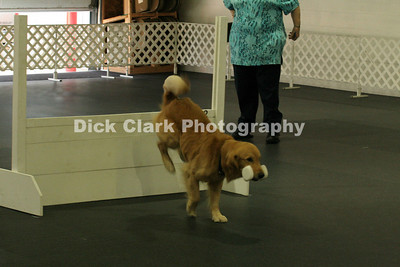 Sunday - Obedience Open B