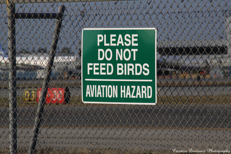 October 6th, 2009  I saw this sign, and well, I have a facination with interesting signs.  So that means no feeding the birds.