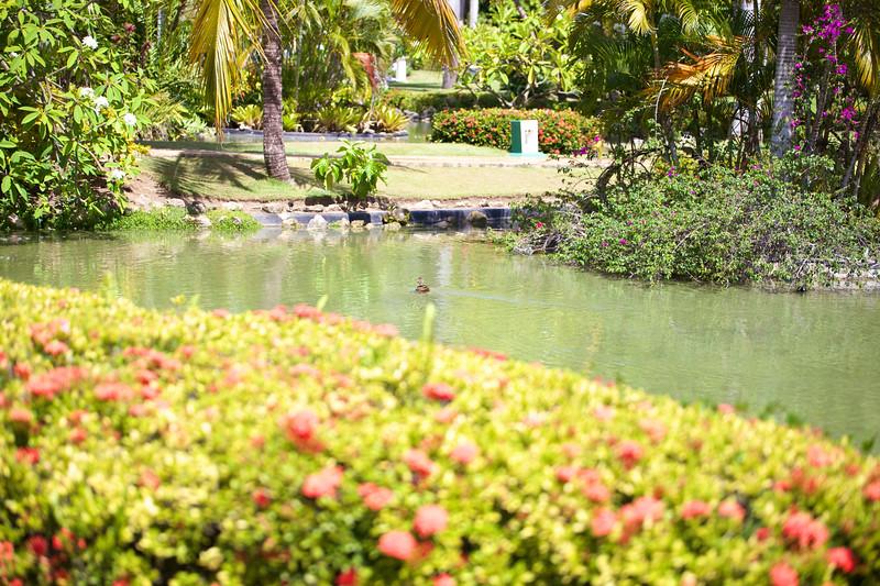 Punta Cana  2014-06-14 327.jpg