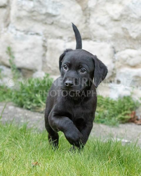 Weika Puppies 24 March 2019-6433.jpg