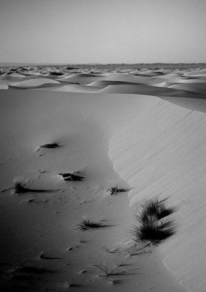 Tu-Nguyen-Destination-Wedding-Photographer-Morocco-Videographer-Sahara-Elopement-315.jpg