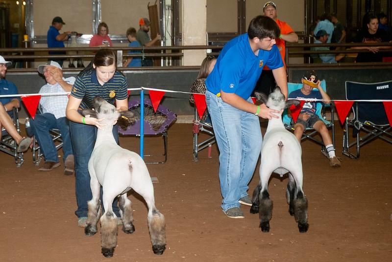 ok_state_fair_20190914_lambs-19.jpg