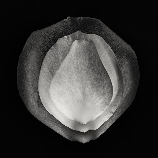 3-petals.jpg