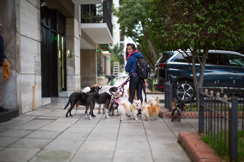 Dog Walker in Buenos Aires
