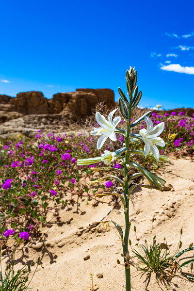 Desert Lily and Miniature Monument Valley