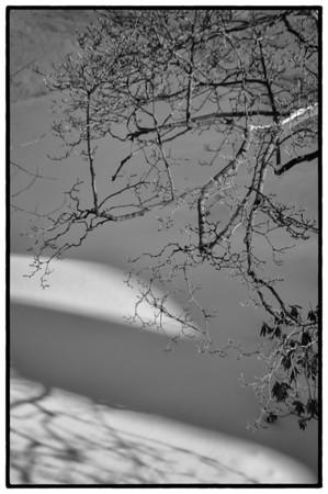 Toronto Winter - In My Backyard