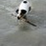 farley pups 076-2.jpg