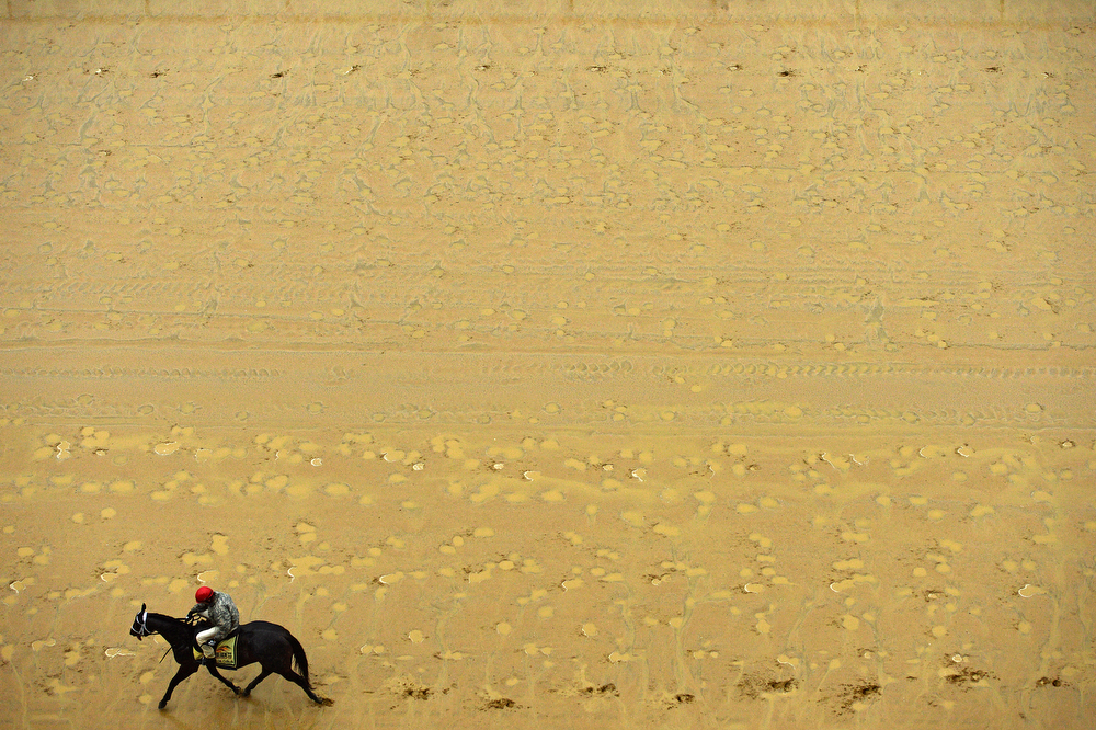 . Exercise rider Bryan Beccia walks Ride On Curlin over the track in preparation for the 139th Preakness Stakes at Pimlico Race Course on May 16, 2014 in Baltimore, Maryland. (Photo by Patrick Smith/Getty Images)