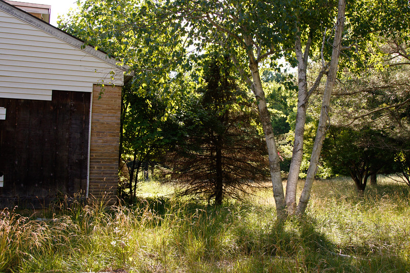 _I0A2956 birch tree side of house.jpg