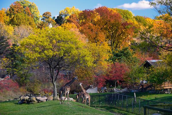 Zoo Fall Colors November 2013
