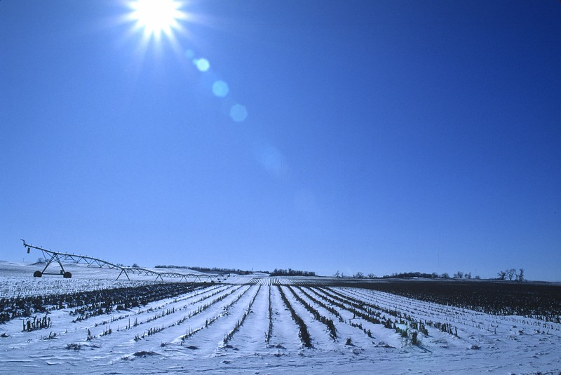 Snow Covered Corn Field