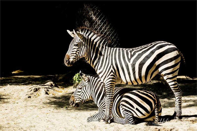 2016-10-05 Zoo Basel0U5A0497-Bearbeitet.jpg