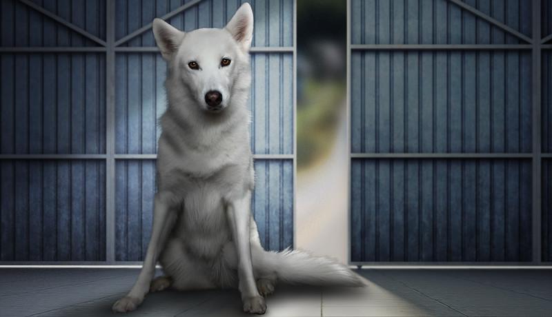 Husky-4.jpg