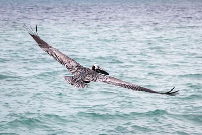 Belize - Birds