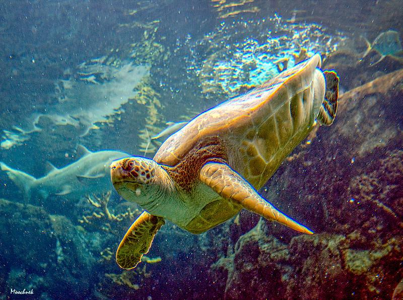 Turtleswimbye.jpg