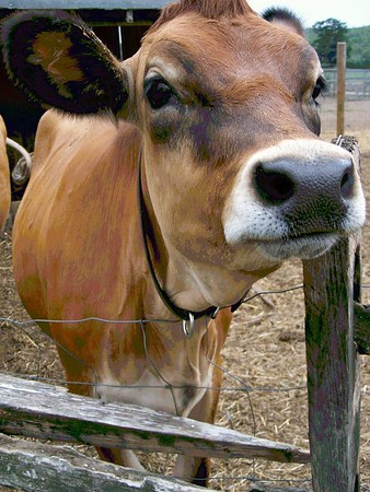 Sankow Dairy Farm
