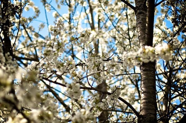 Sunny April Walk