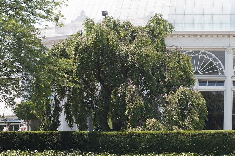 2009 06 30_NY Botanical Gardens_0734.jpg