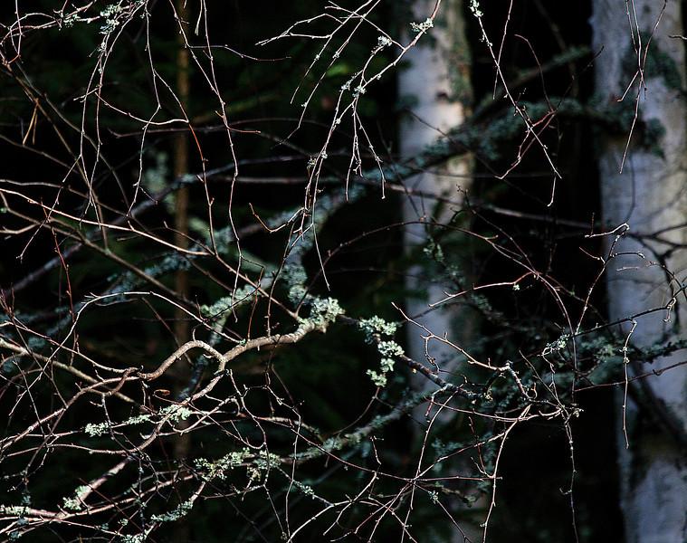 Dag_184_2012-okt-12_1309.jpg