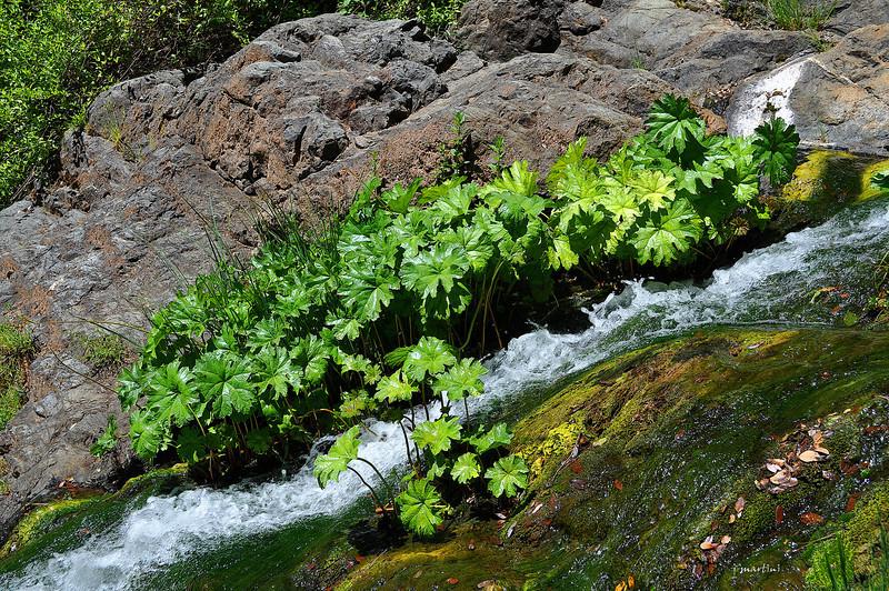 water chute 6-3-2012.jpg