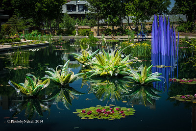 Chihuly at the Gardens