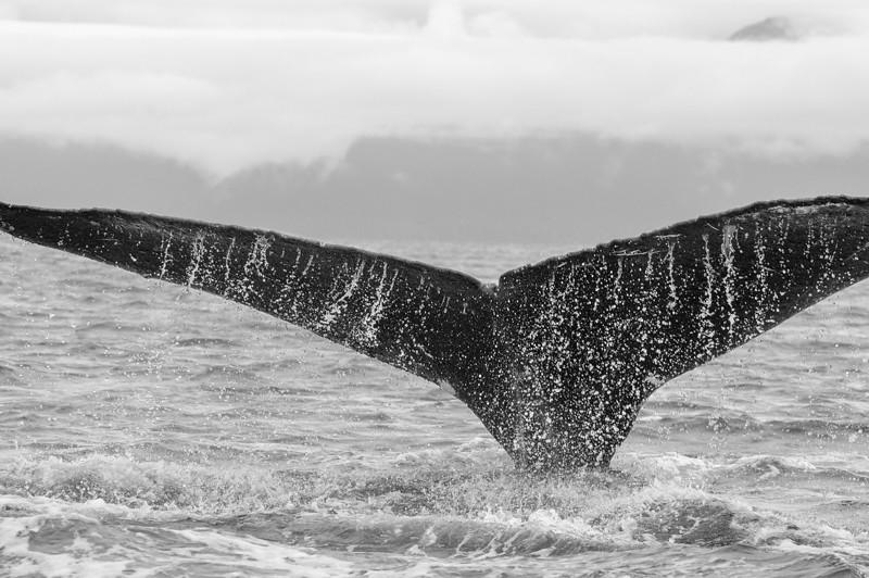 AK_Whales-31.jpg