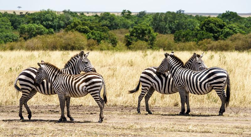 Kenya 2015-02442.jpg