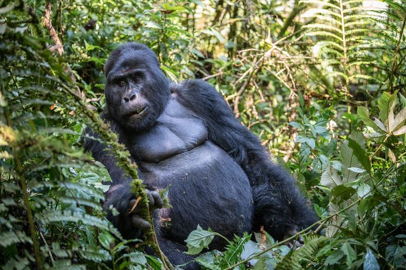 Uganda_T_Gor-362.jpg