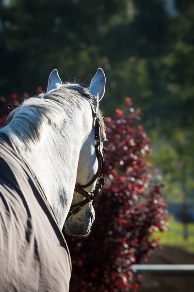 Thoroughbred Classic Horse Show - Sunday