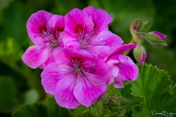 Spring Flowers from our garden - November