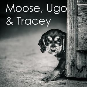 Moose, Ugo & Tracey
