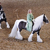 Gypsy Horses.   According to Gypsy lore, Gypsy gold does not glitter and clink, it shimmers by day and nahs at night.