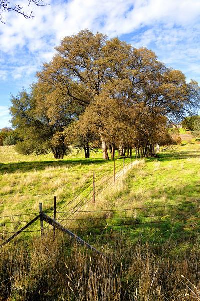 pasture fenced 11-26-2012.jpg