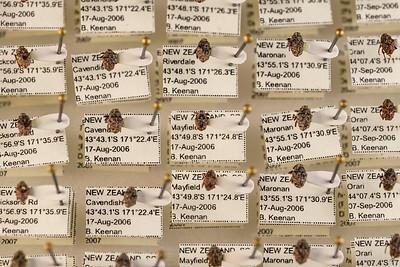 181106_macro_bugs_large