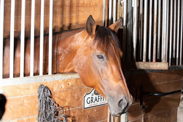 Grad with Horses June 29 2018