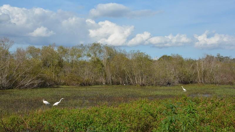 Marsh with birds