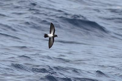 2012 April 28 Wollongong Pelagic