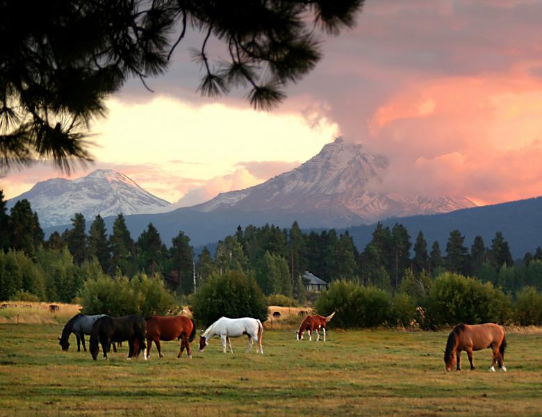 horses sunset 10x13 092106 MASTER 080306_8313NR copy.jpg