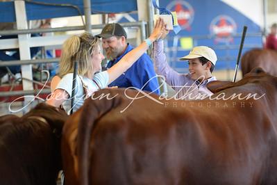 Open Breeding Cattle Ringshots 1