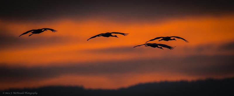 Llano Seco Cranes, Curlews & Raptors