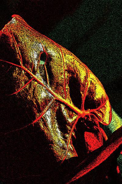 20100610_delaNuez_1219_CA1.jpg